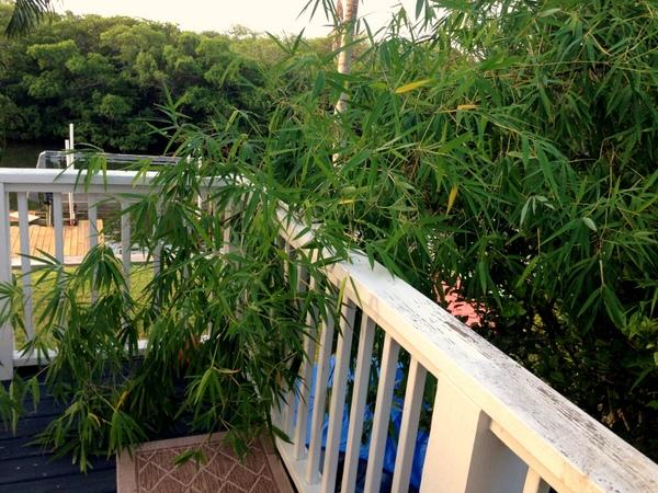 Backyard Camping - Bamboo
