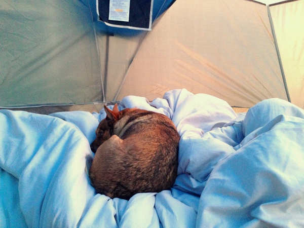 Backyard Camping - Star curled up