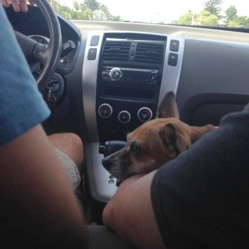 Getting comfy in Dad's lap on the ride home.